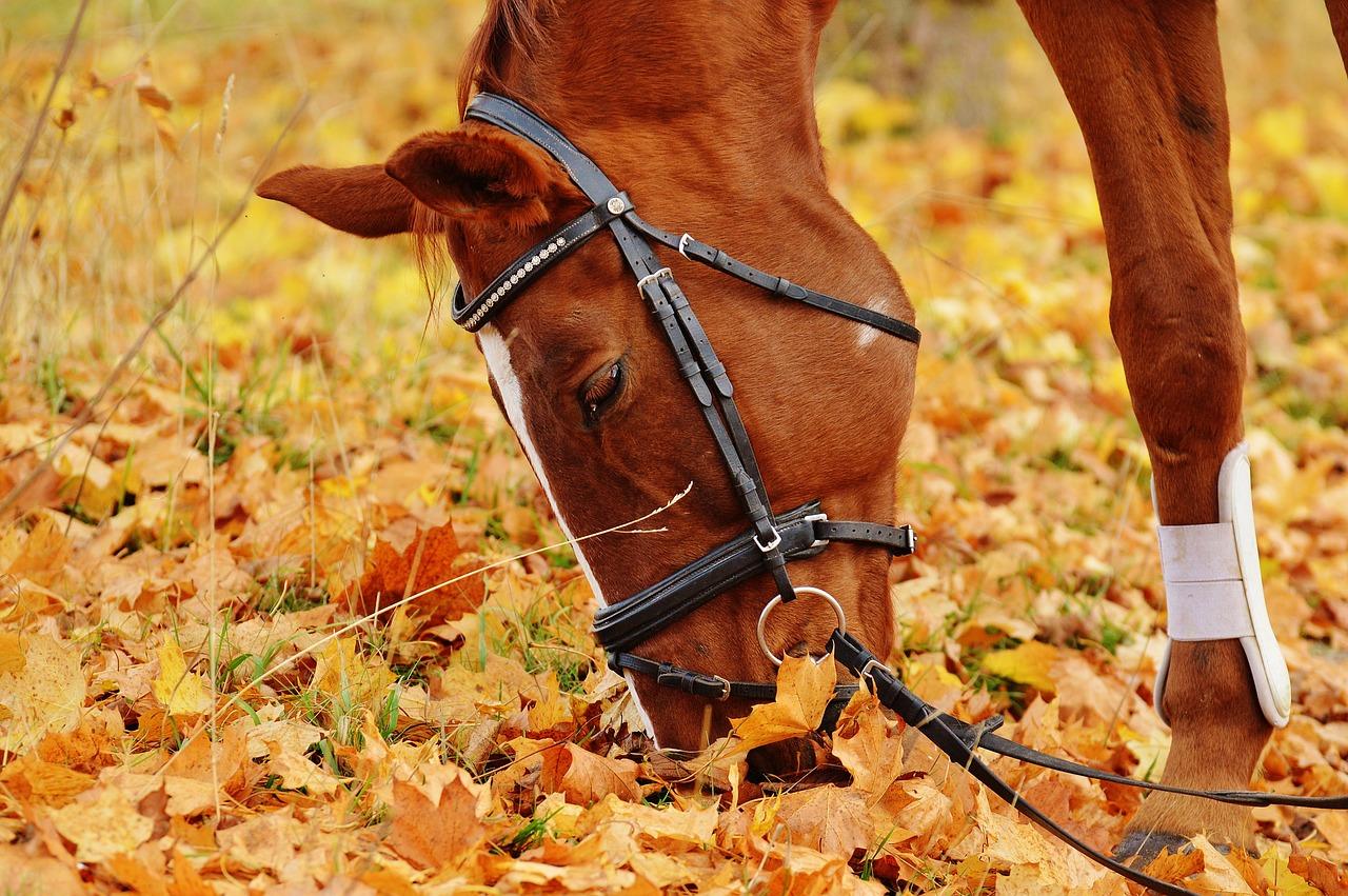 סוס אוכל