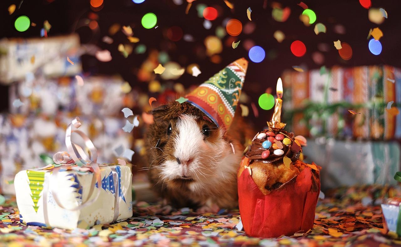 קונפטי ומתנות יום הולדת